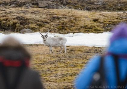 North Spitsbergen - Basecamp - Free kayaking, hiking, photo workshop