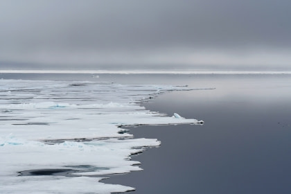 Around Spitsbergen, In the realm of Polar Bear & Ice - Birding