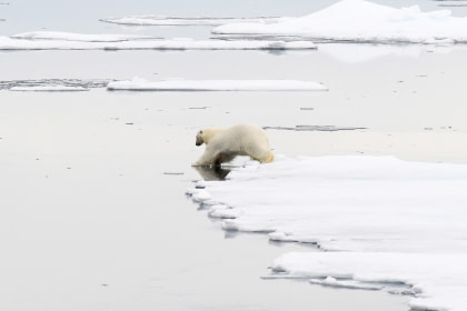 Around Spitsbergen, In the realm of Polar Bear & Ice