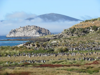 8 days South Georgia Special incl. Steeple Jason, Carcass Island, Falkland Islands