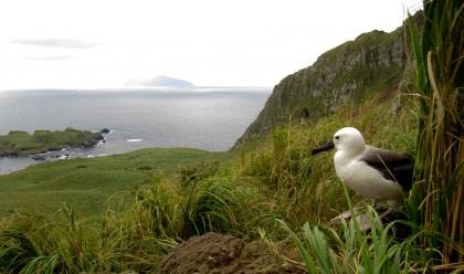 Nightingale Island#}