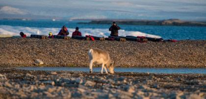 Rond Spitsbergen - Kvitøya, In het gebied van de ijsbeer en ijs