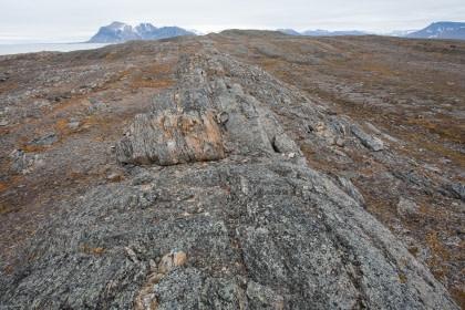 Akseløya#}