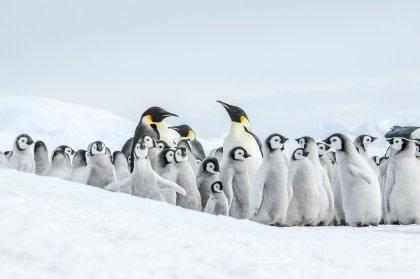 Mar de Weddell – En busca del pingüino Emperador, incl. Helicópteros