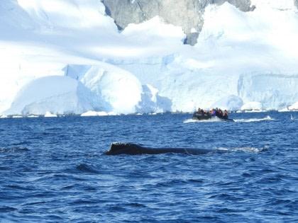 Antarctica - Polar Circle - Whale watching voyage
