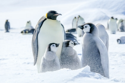 Weddell Sea - In search of the Emperor Penguin incl. helicopters
