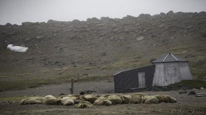 East Spitsbergen - Summer Solstice