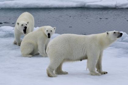 Rund um Spitzbergen - Im Reich von Eisbär & Eis