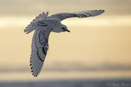 Birding#}