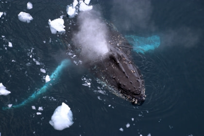 Antarctica - Whale watching voyage