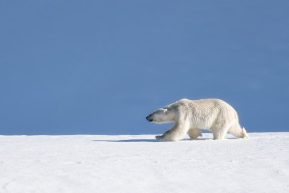 Around Spitsbergen - In the realm of Polar Bear & Ice