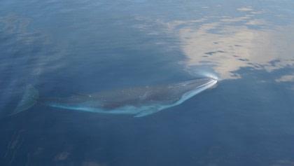 Bodo - Whale Safari - Bear Island - South Spitsbergen