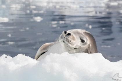 Antarktis  -  Entdeckung und Lernreise