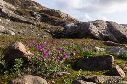 Ost Grönland – Scoresbysund, Nordlicht