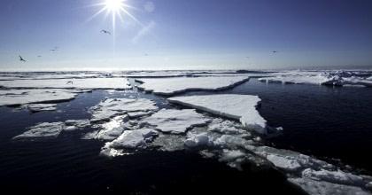 Arctic Ocean Expedition, Fair Isle - Jan Mayen - Ice Edge - Spitsbergen - Birding