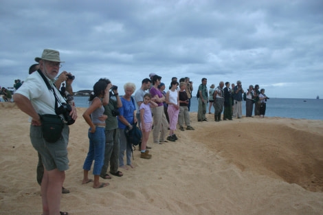 Seeing turtles laying eggs on Ascension Island