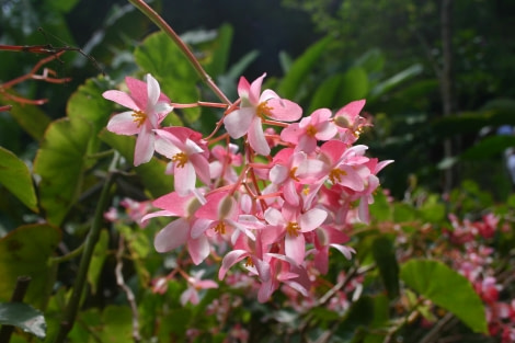 Flora of St Helena
