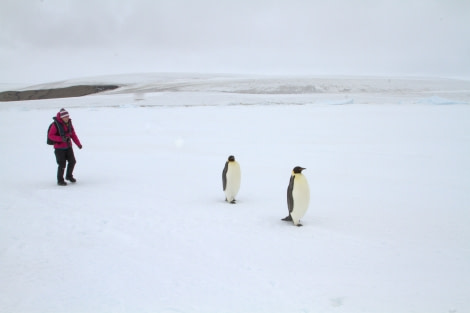Emperor Penguins in the Weddell Sea