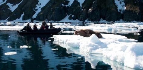 Zodiac cruising | Wildlife spotting