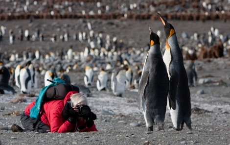 Photographing King Penguins, South Georgia