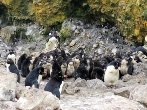 PLA26-16_New Island_Shelli-Oceanwide Expeditions.JPG
