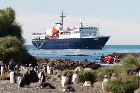 Ortelius at Prion Island, South Georgia, February