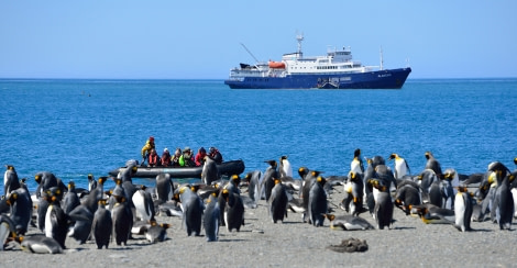 Plancius in South Georgia, Zodiac cruising, King Penguins © Martin van Lokven-Oceanwide Expeditions