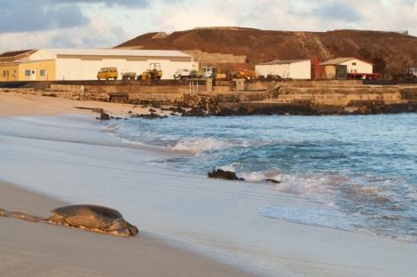Green turtles, Ascension Island © Troels Jacobsen-Oceanwide Exeditions (2).JPG