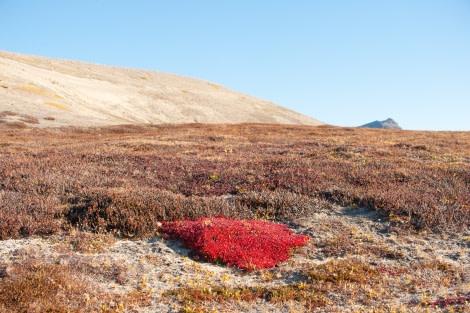 Northeast Greenland, Tundra, September © Erwin Vermeulen-Oceanwide Expeditions.jpg