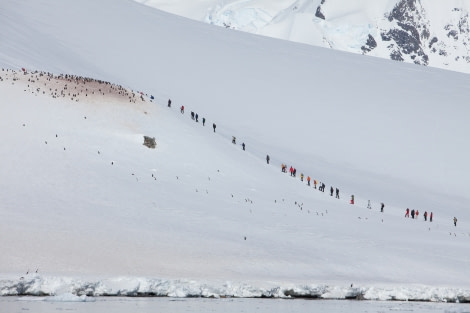 Snowshoeing at Danco Island, Antarctica © Troels jacobsen-Oceanwide Expeditions (2).JPG