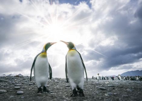 Falklands, South Georgia, Ant Peninsula © Fotografie Dietmar Denger-Oceanwide Expeditions96.jpg