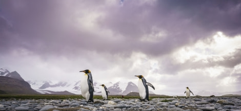 Falklands, South Georgia, Ant Peninsula © Fotografie Dietmar Denger-Oceanwide Expeditions89.jpg