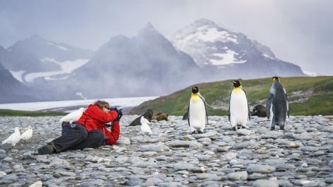 Falklands, South Georgia, Ant Peninsula © Fotografie Dietmar Denger-Oceanwide Expeditions109.jpg