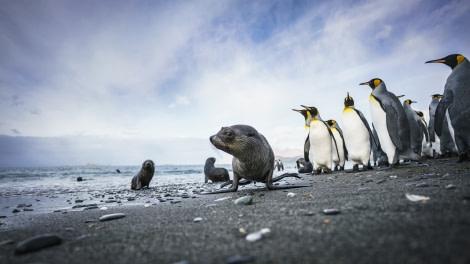 Falklands, South Georgia, Ant Peninsula © Fotografie Dietmar Denger-Oceanwide Expeditions108.jpg