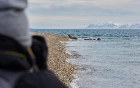 North Spitsbergen Polar Bear Special, June © Markus Eichenberger-Oceanwide Expeditions (89).jpg