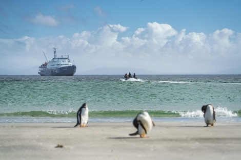 Falklands, South Georgia, Ant Peninsula © Fotografie Dietmar Denger-Oceanwide Expeditions37.jpg