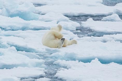 North Spitsbergen Polar Bear Special, June © Markus Eichenberger-Oceanwide Expeditions (55).jpg