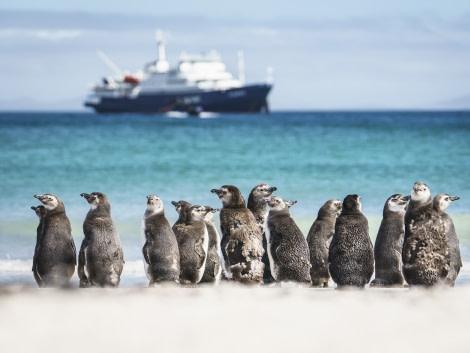 Saunders Island, Falklands,  © Fotografie Dietmar Denger-Oceanwide Expeditions21.jpg