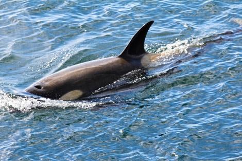 PLA28-17, orca, day 4.jpg