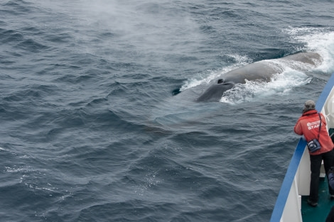 Blue whale, Antarctica © Leo Hoogerbrugge-Oceanwide Expeditions.jpg