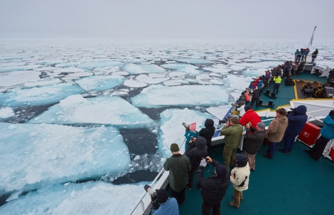 North Spitsbergen Polar Bear Special, June © Markus Eichenberger-Oceanwide Expeditions (13).jpg