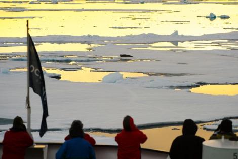 Around Spitsbergen, Kvitoya, August © Zoutfotografie-Oceanwide Expeditions (146) - kopie.JPG