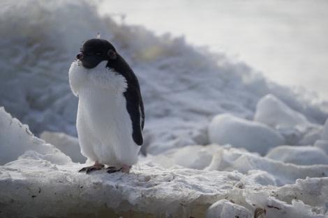 Ross Sea, Antarctica © Michael Martin-Oceanwide Expeditions (12).jpg