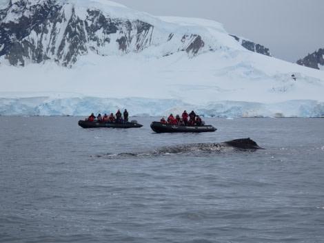 PLA30-20, Day 08, 23 FEB, Wilhelmina & Foyn, P1030191 -Oceanwide Expeditions.JPG