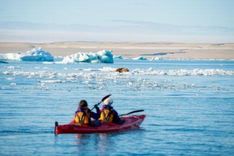 Around Spitsbergen, Kvitoya, August © Zoutfotografie-Oceanwide Expeditions (246).jpg