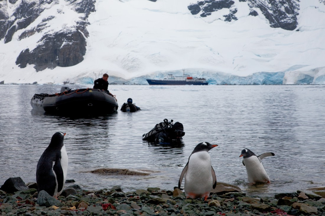 Divers doing a check dive in Antarctica