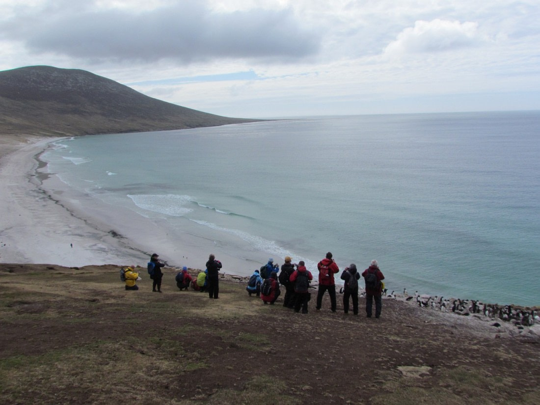 Observing the wildlife on Saunders Island