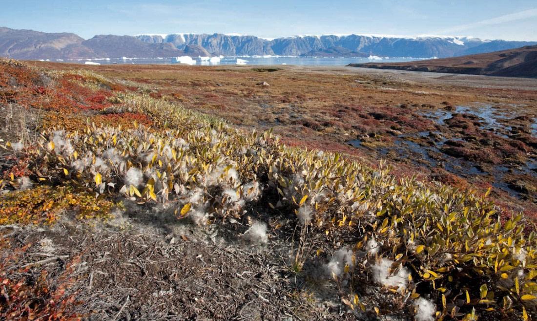East Greenland, Røde Fjord, Scoresby Sund photographed in September