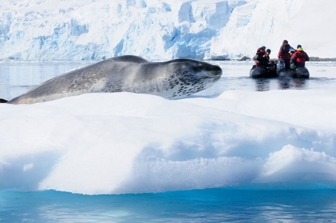 Leopard seal in Paradise Harbour in Antarctica