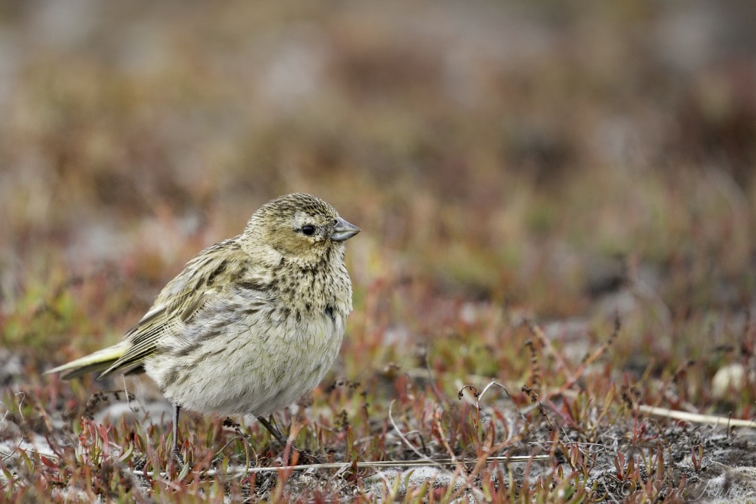 Bird watching on the Falkland Islands